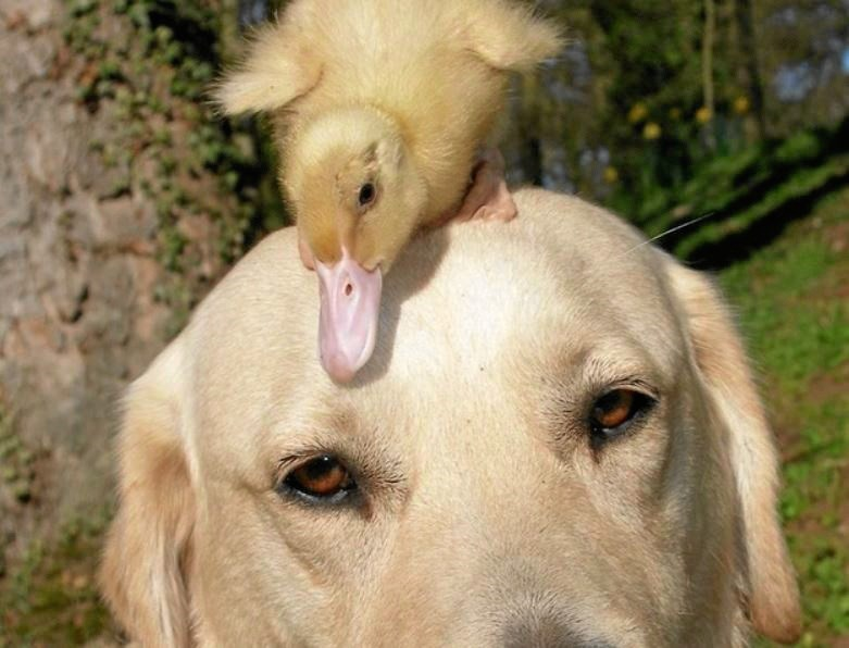 Bekjent dyr venner