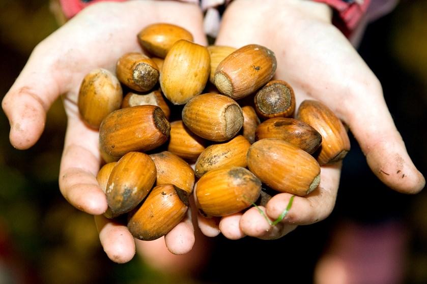 Det kan betale sig at spise nødder, hvis du vil tabe dig