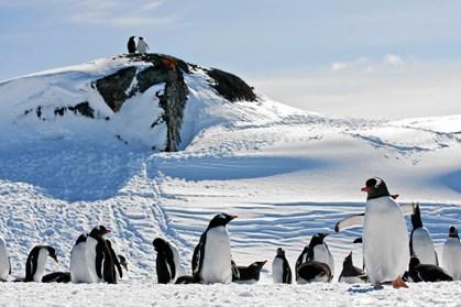 Et isbjerg, der er næsten lige så stort som Fyn, har blokeret pingviners adgang til det åbne hav på Antarktis