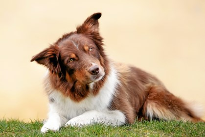 Find den bedste pasningsform til din hund