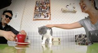 Syntetiske stoffer i dit hjem kan berolige din kat