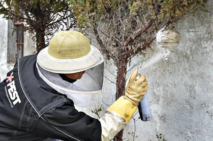 Er der et irriterende hvepsebo i din have er det nu, du kan gøre noget ved det