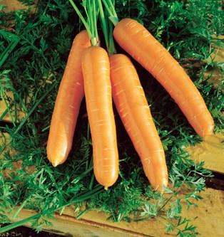 Den 'originale' gulerod har faktisk en helt anden farve end orange