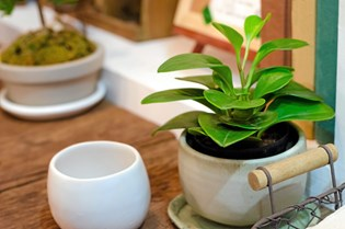 Du kan vande dine planter, selvom du ikke er hjemme