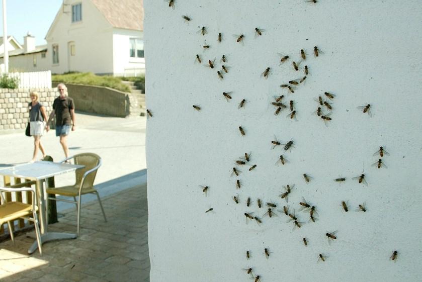 Fuglefamilier er den mest effektive fluedræber