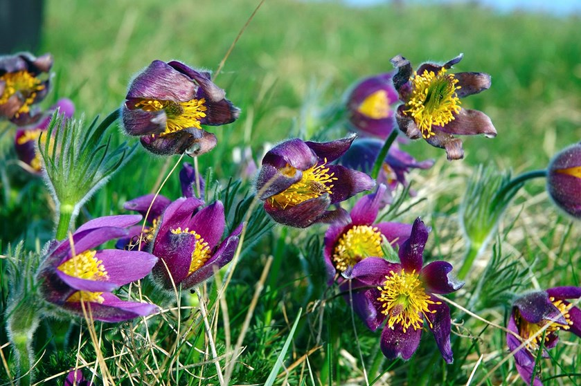 Scor gratis løg og blomster til haven