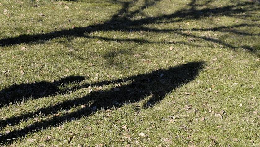 Det er ved at være tid til den sidste plæneklipning for i år. Og vil du give din græsplæne de bedste forudsætninger for at komme godt gennem vinteren, er der et par vigtige ting, du skal huske