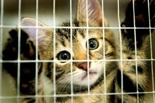Danskerne finder i stigende grad deres kæledyr hos Dyrenes Beskyttelse