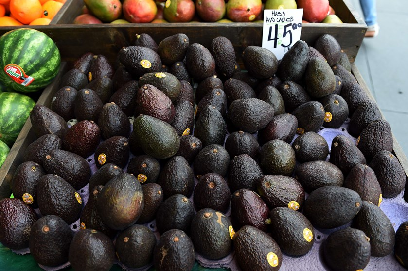 Plantager i provins i Chile bruger så meget vand til at dyrke avocadoer, at det går ud over lokalbefolkningen.