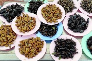 En plastikbakke med melorme eller sprøde græshopper er et nyt syn i supermarkedets køledisk, men insekter er kommet på menuen for at blive.