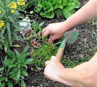 I stedet for at bekæmpe og irritere dig over dit genstridige ukrudt og havens vilde planter, kan du bruge det i madlavningen i stedet.