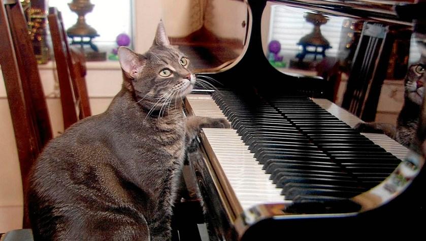 Se videoen! Katten Nora er verdens bedste pianist med pels og fire ben