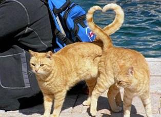 SE VIDEO! Mød ægteparret der mildest talt er besat af katte og derfor har indrettet hele deres hus efter det