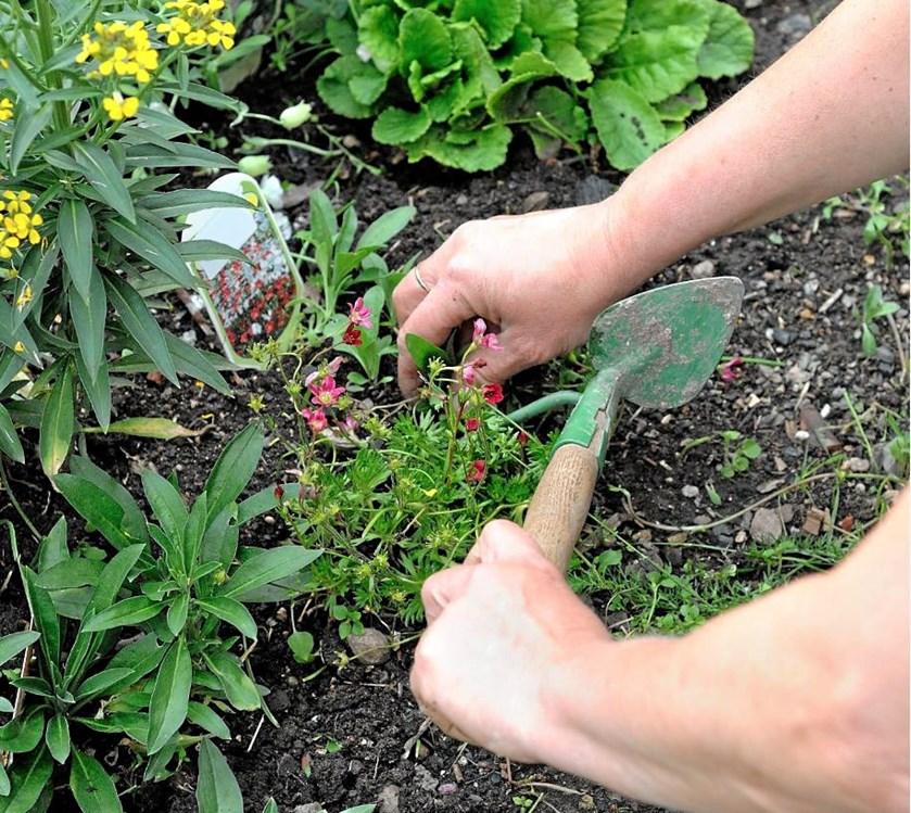 Noget ukrudt kender alle. Det gør ondt at træde på en tidsel, mælkebøtterne stikker pludselig op midt i græsplænen, eller også bliver græsset blødere og blødere af mos.