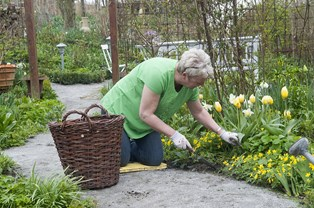 Drømmer du om en have, der ikke kræver timevis af arbejde?