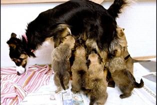 Skal familien udvides med en hundehvalp, så se dig grundigt for. 23 gange er Dyrenes Beskyttelse rykket ud til hvalpefabrikker