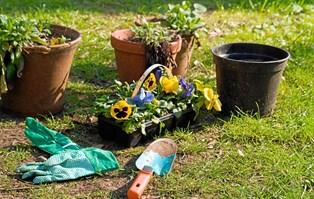 En flot have har i årevis betydet en græsplæne uden mos, kløver og bellis og bede uden ukrudt mellem planterne, men noget har ændret sig.