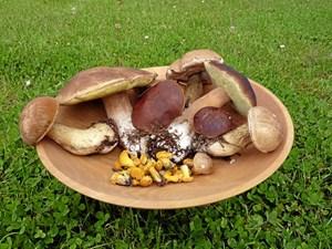 Listen over spiselige svampe i skoven spænder vidt.