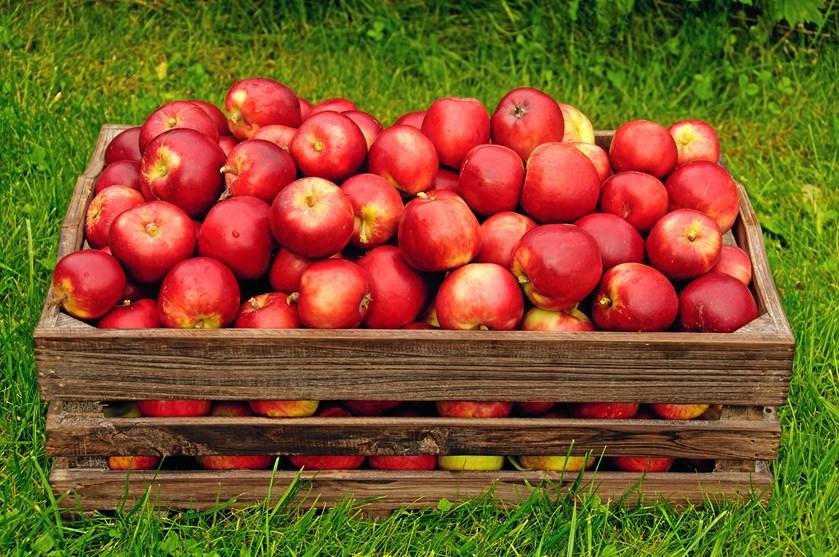 Efteråret er på vej, og et væld af frugter falder mod jorden inden vinterens komme.