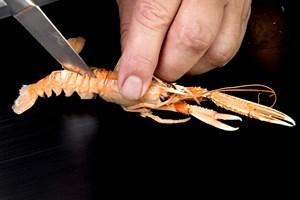 Kast dig ud i hvidvinsdampede muslinger eller lynkogte jomfruhummere, det er nemlig sæson for de lækre skaldyr og bløddyr