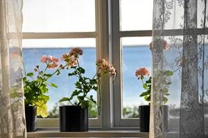 Er bladene krøllet sammen, stænglerne skrumpet, og hænger blomsterhovederne, er det faktisk muligt at få sine slatne stueplanter til at strutte igen.