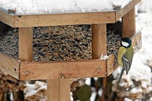 Når du fodrer havens fugle, skal det gøres korrekt, så foderbrættet ikke risikerer at blive en smittekilde.