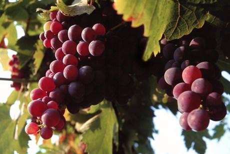Mange vælger bare en billig vin, når gløggessensen skal spædes op. Og det kan også være helt fint, men der er nogle fælder og gode råd, man bør kende