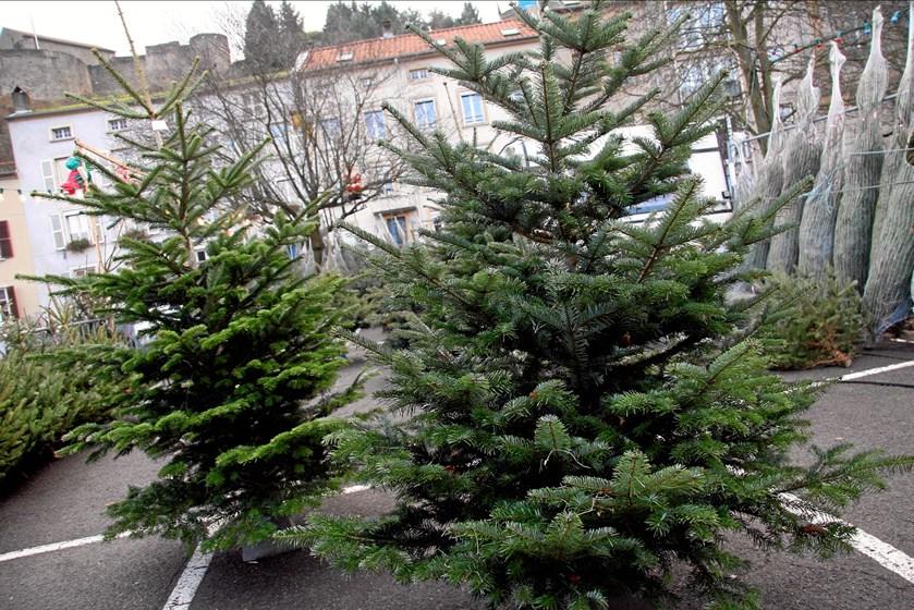 Hvornår skal man købe juletræet? Hvilken type træ skal det være? Og hvordan får man det til at stå flot helt til helligtrekongersaften? Få overblik her.