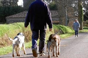 Nytårsfyrværkeriet er lidt af et mareridt for mange hunde og hundeejere. Men der er en række ting, man kan gøre for at hjælpe en skræmt hund.