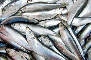 Får du dit daglige forbrug af fisk, så har du muligvis ikke problemer med at falde i søvn om natten. Det viser nyt udenlandsk forskningsstudie.