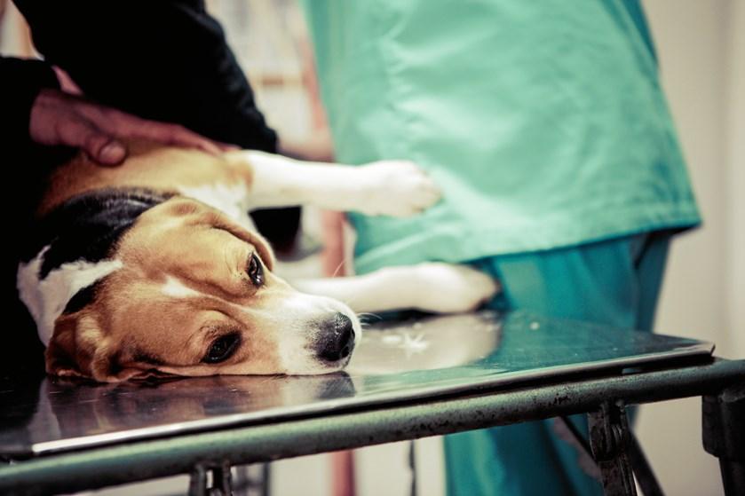 Hvis du på forhånd undersøger priser og behandling hos dine nærmeste dyrlæger, er det mange penge at spare, viser en gennemgang.