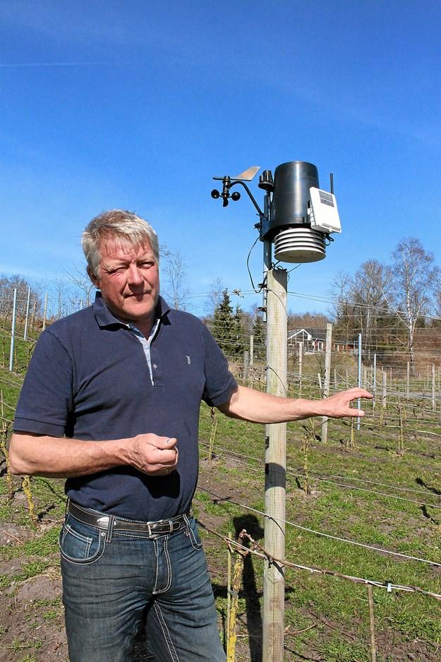 Danske vinavlere går sammen