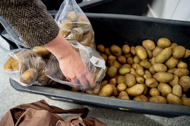 Friske nordjyske økologiske kartofler.