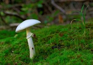 To børn er døde efter frygtet svampeforgiftning