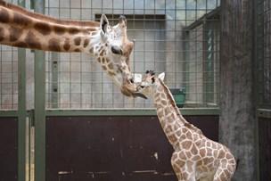 Zoo-dyrepassere i oprør over ændringer i arbejde