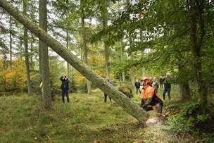 På jagt efter mast i Ølandskoven