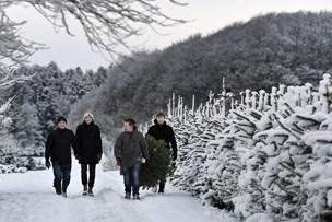 Rift om juletræer, der er pyntet med rødt Ø