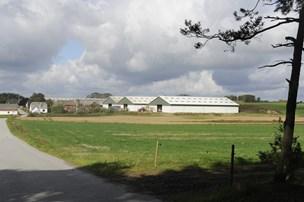 Tilløbsstykke: Nykredit gav 135 millioner for kvægbrug på tvangsauktion