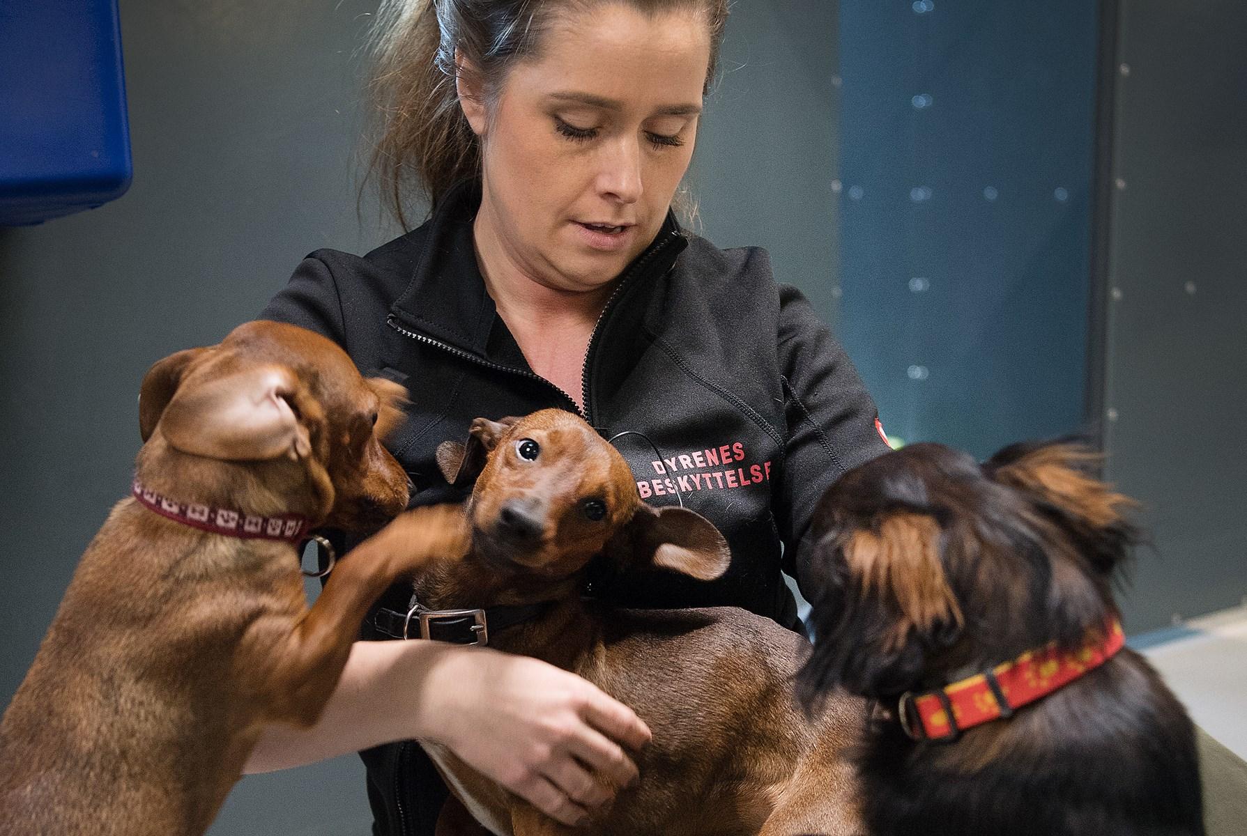 Hunde måtte fjernes: Sådan har de det nu