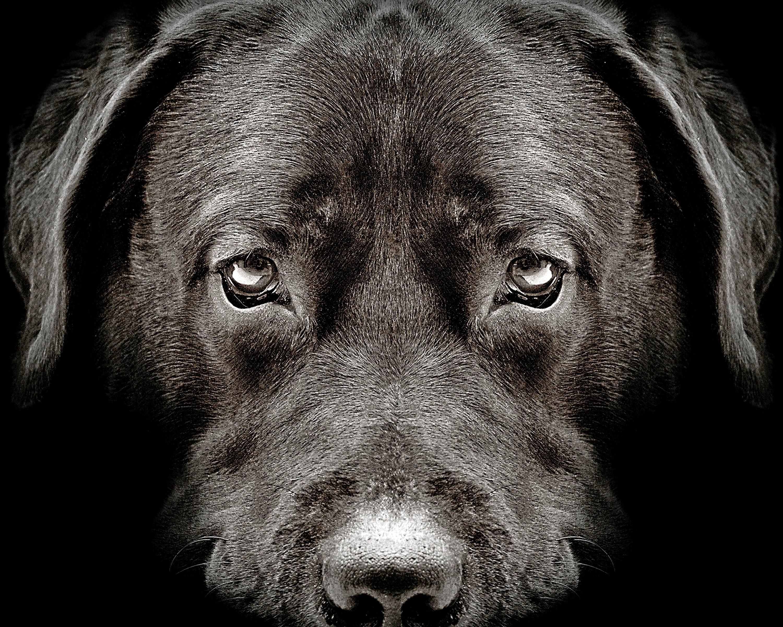 Pas på: Antallet af påkørte hunde stiger