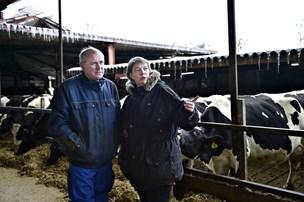 Nævn tvinger landmand til kovending i sag om kæmpe kvægstald