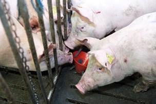 Møggode tider for svine- og mælkebønder - råddent år for planteavlere
