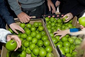 Forbrugerne rådes til at levere pærerne tilbage eller kassere dem, fordi de har et højt indhold af pesticider