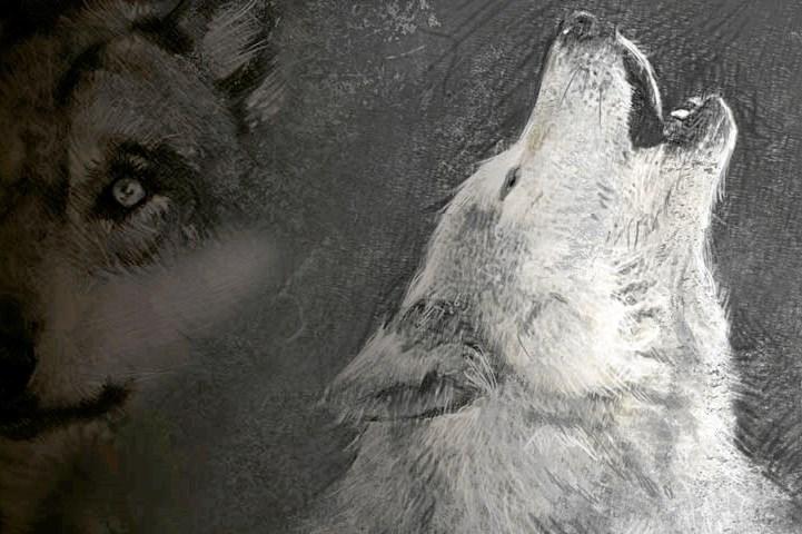 Pas på - ulven kommer