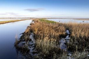 Oversvømmelse: - Staten må betale for oprensning