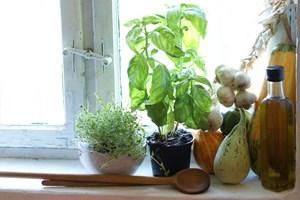 Saml et udvalg af krydderurter i vindueskarmen nu - så er der altid smagfuldt grønt til madlavningen