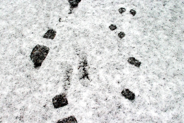 Fodspor i sneen ledte til indbrudstyve