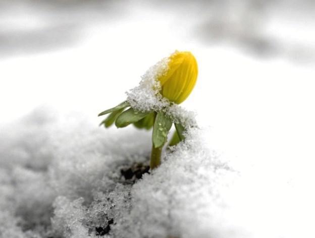 Vrøvl om foråret - det begynder først ved jævndøgn