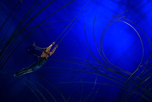 Cirkusartist styrter i døden under show