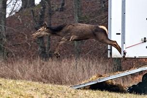 Ny dyrepark i Nordjylland - landets næststørste